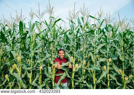 Happy African Farmer With Hat Sitting On Cornfield And Showing Thumbs Up. Young Farmer Looking At Ca
