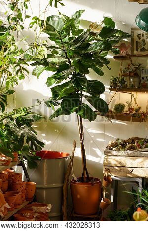 Small Business Concept: Retail Store For Home Gardening And Interior Design With Houseplants, Cerami