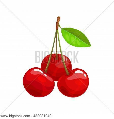 Bunch Of Cherries With Leaf Isolated Berry Fruit. Vector Berries With Green Leaf, Botanical Dessert