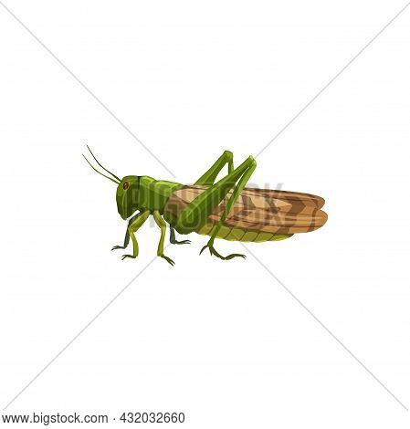 Locust Grasshopper Icon, Pest Control Insect, Vector Isolated. Pest Control Disinfection, Exterminat