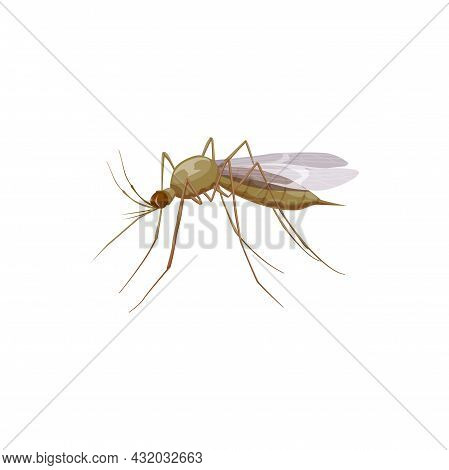 Mosquito Icon Or Insect Parasite, Pest Control And Health Disinsection Symbol, Vector Isolated. Mosq