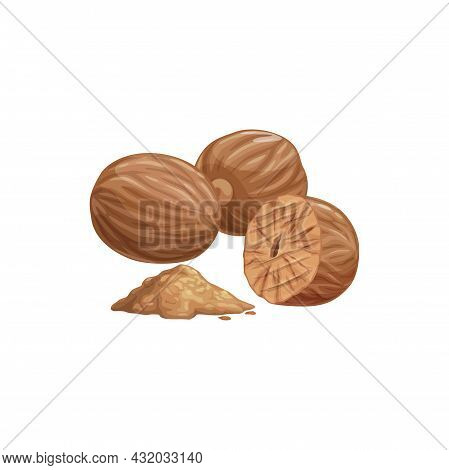 Fragrant Or True Nutmeg Whole And Powdered Cartoon Isolated Icon. Vector Pala Edible Seed, Culinary