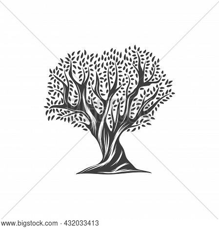 Olive Tree With Leaves Icon, Olive Oil Vegetable And Nature Food Plant, Vector Isolated Label. Olive