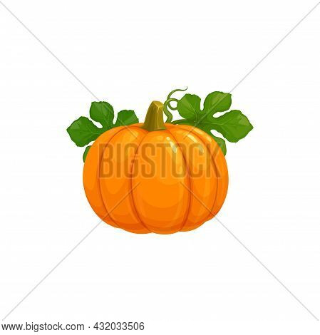 Pumpkin, Autumn Thanksgiving Harvest Vegetable, Vector Isolated Icon. Pumpkin Gourd With Green Leave