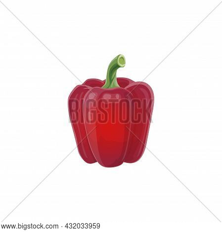 Red Bell Pepper Vector Natural Fresh Vegetable, Healthy Food Isolated On White Background. Cartoon P