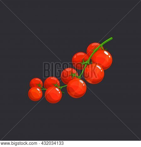 Cherry Tomato Vegetables On Green Branch Isolated Veggie In Realistic Design. Vector Branch Of Tomat