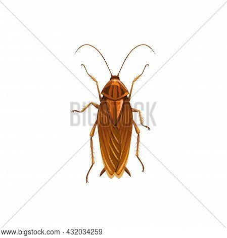 Cockroach Icon, Insect Parasite And Pest Control, Domestic Disinsection, Vector Isolated. Cockroach