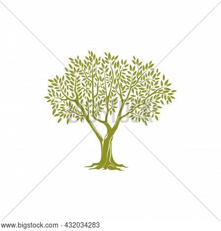 Olive Tree On Thick Trunk And Green Crown Of Leaves Isolated Icon. Vector Botanical Agricultural Gre
