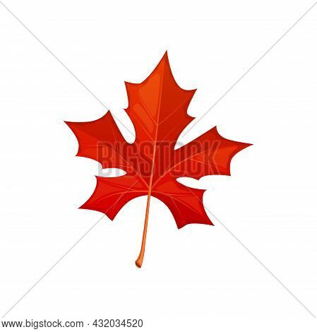 Autumn Maple Red Leaf Vector Icon, Fallen Tree Foliage, Bright Leaf Natural Design Element, Isolated