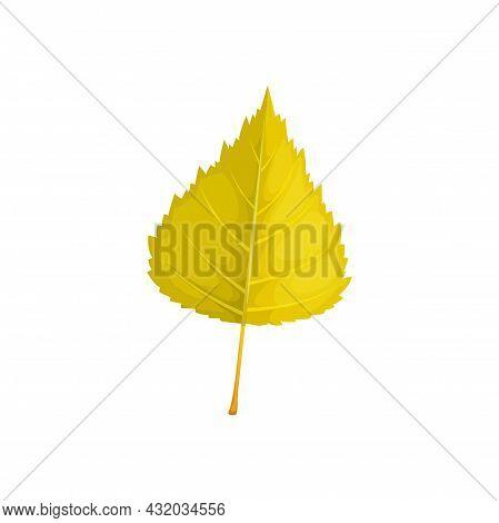 Autumn Birch Leaf Vector Icon, Cartoon Foliage, Fallen Tree Leaf Of Yellow Color. Natural Design Ele