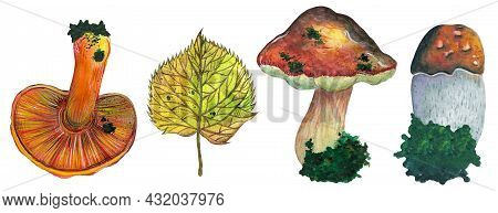 Watercolor Set Forest Mushrooms And Leaves. Colorful Edible Boletus, Porcini, Chanterelle. Hand Draw
