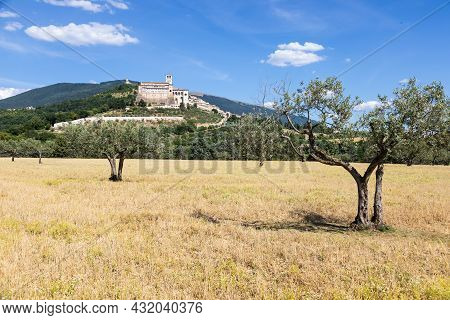 Olive Trees In Assisi Village In Umbria Region, Italy. The Town Is Famous For The Most Important Ita