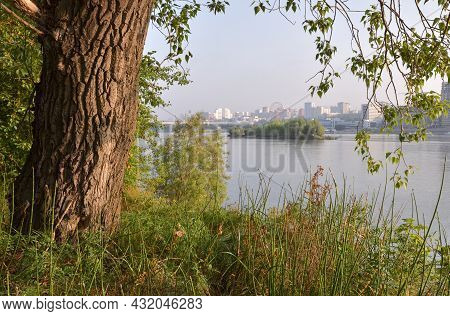 Green Coast Of Ob And Novosibirsk On The Horizon. Tree Trunk Close-up, Green Grass, Hanging Branches