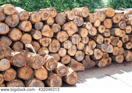 Stack Wood Tree Trunk Log Stock In Forest, Woodpile Or Firewood Storage For Restaurant Or Industry.