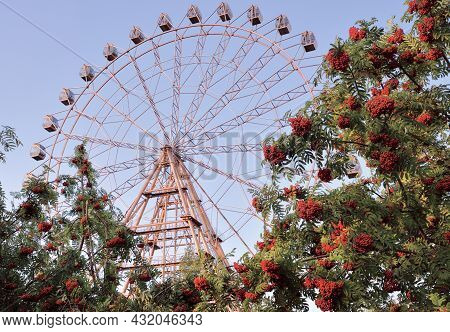 Rowan Tree With Ferris Wheel. Bunches Of Red Mountain Ash On The Background Of The Ferris Wheel And