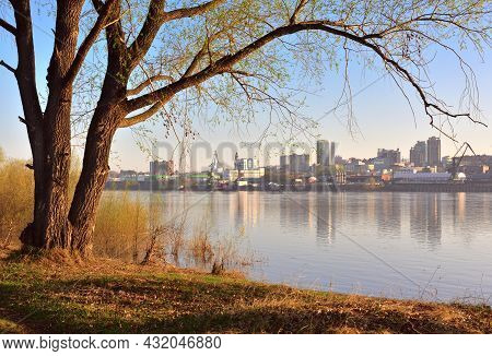 Early Morning On The Great Siberian River, A Tree Trunk With An Arch Of Branches In The Rays Of The