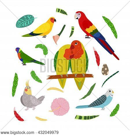 Design Template With Parrots In Square For Kid Print. Rectangle Composition Of Tropical Birds Lovebi