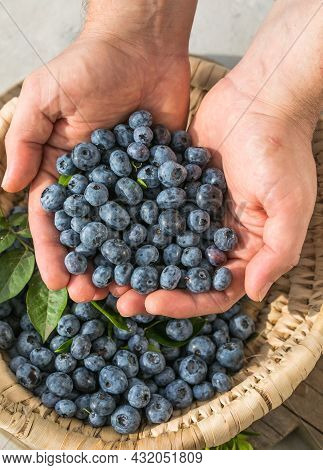 Freshly Picked Blueberries In A  Man's Hand. Healthy Food And Nutrition Concept. Harvest. Macro Text