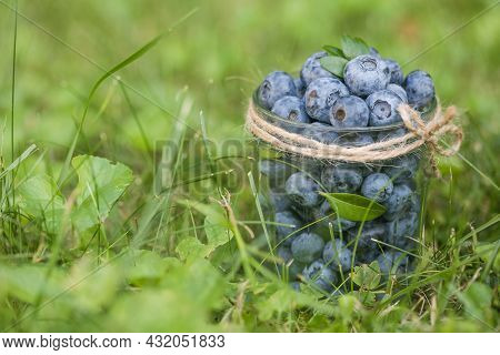 Freshly Picked Blueberries In Glass Jar On Green Grass. Concept Of Healthy Eating. Bilberries.  Diet