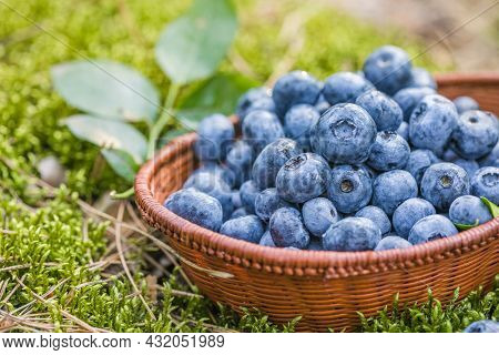 Freshly Picked Blueberries In Bowl On Forest Moss Background. Concept Of Healthy Eating. Bilberries.