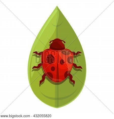 Plant Ladybug Icon Cartoon Vector. Ladybird Bug. Garden Insect