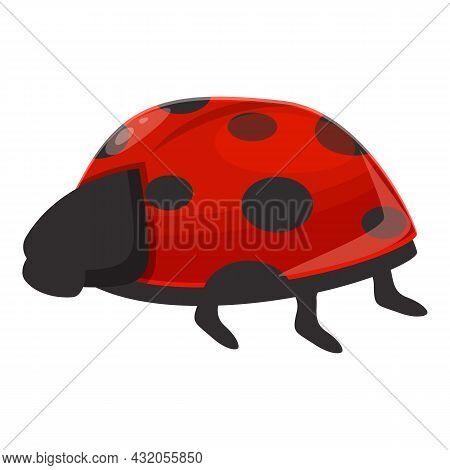 Spotted Ladybug Icon Cartoon Vector. Ladybird Beetle. Bug Insect