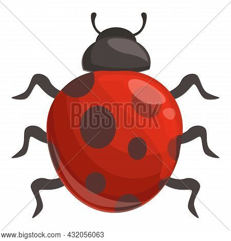Season Ladybug Icon Cartoon Vector. Ladybird Bug. Beetle Insect