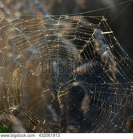 Background Of The Threads Of A Spider Web With Dew Drops. Web Macro. Abstract Natural Background In