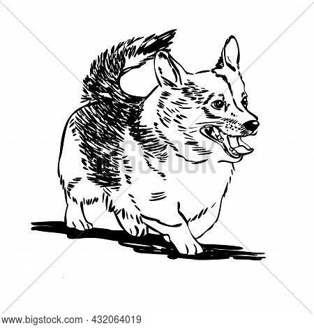 Corgi Dog. Welsh Corgi Vector Illustration. Outline Style.