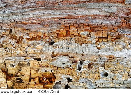 Texture Of Decaying Wood Trunk With Cracks And Holes, Eaten By Pests, Closeup
