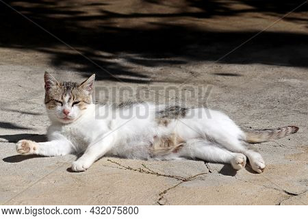 Cat Is Basking In The Sun Lying On The Street. Relaxed Cat Lying Outdoors