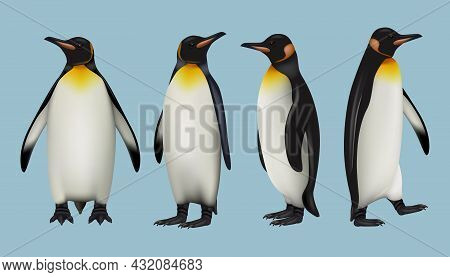 Pinguins Realistic. Arctic Fauna Wild Animals In Cold Outdoor Environment Father Mother And Other Im
