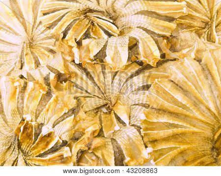 Round Dried Fishes From Thailand As Background