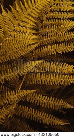 Vertical Smartpone Stories Format Background Of Brown Autumn Fern Leaves. Selective Focus