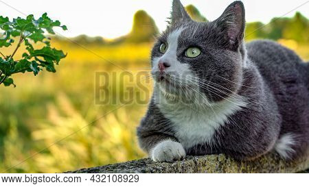 Close Up Portrait Of Cute Cat Looks Up