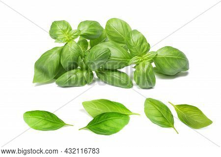 Fresh Basil Bunch And Basil Leaves  Isolated On White Background