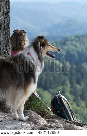 Rough Collie Alertly Observing Surrounding Area. Female Hiker With Backpack In Background. Pets, Fri