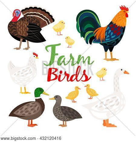 Adorable Set Of Different Farm Birds Vector Illustration