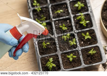 Caring For Indoor Plants, Transplanting Plants In Small Pots, Planting Plants In Pots