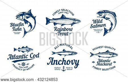 Vector Fish Logo And Fish Illustrations