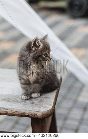 Cute Little Grey Kitten With Green Eyes Relaxing On Wood Chair, Closeup