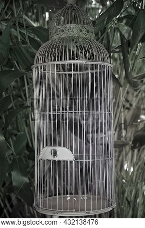Vintage Bird Cage Used As A Decorative Feature At A Wedding Reception