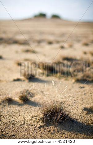 Details In The Desert