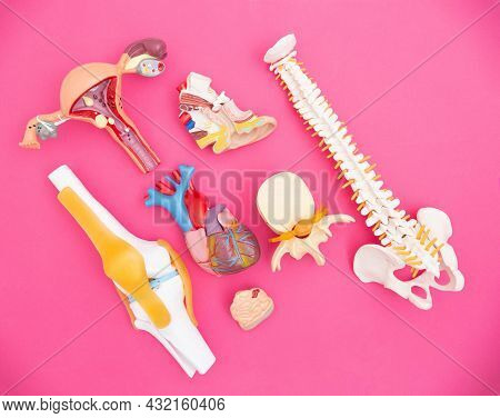 Human Organs Layouts On A Pink Background. The Concept Of Complications On Organs After Suffering A