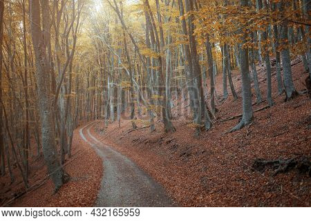 Autumn Forest Scenery With Road Of Fall Leaves, Warm Light Illumining The Gold Foliage. Footpath In