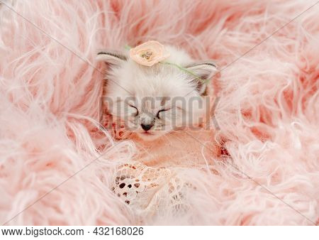 Adorable little ragdoll kitten sweety sleeping swaddled in pink peach fur and knitted blanket with flower on its head during newborn style photoshoot in studio. Cute kitty portrait