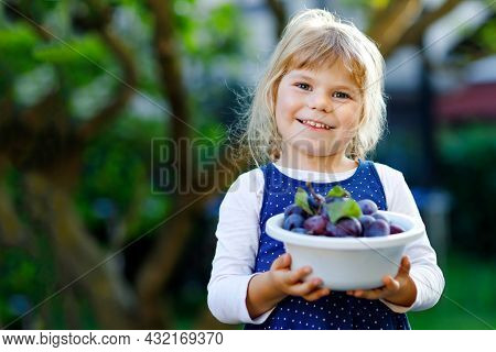 Cute Little Toddler Girl Picking Ripe Plums From Tree In Garden. Happy Child Holding Fresh Fruits. H