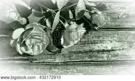 White Roses On A Wooden Table. Stylized Postcard In Gray - Green Monochrome. Congratulations Or Expr