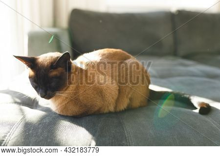 Close up of cute cat lying in sun on couch with eyes closed in living room. spending time alone at home.