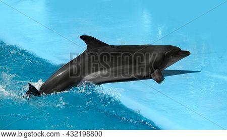 Dolphin Near Pool At Marine Mammal Park